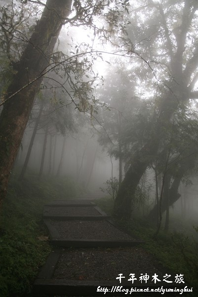 馬告生態公園--神木園 (54).jpg
