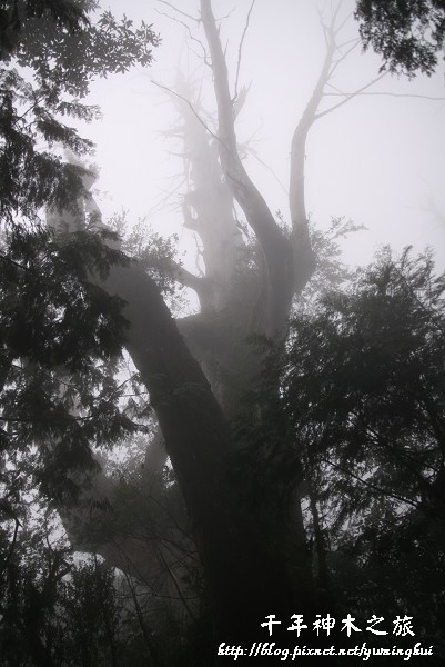馬告生態公園--神木園 (53).jpg