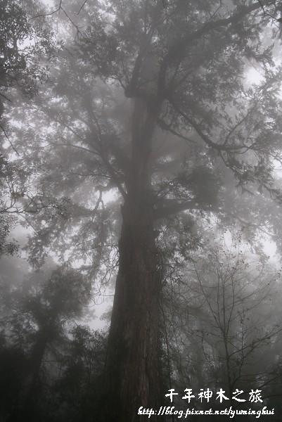 馬告生態公園--神木園 (52).jpg