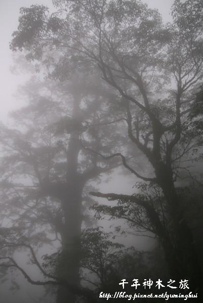 馬告生態公園--神木園 (51).jpg