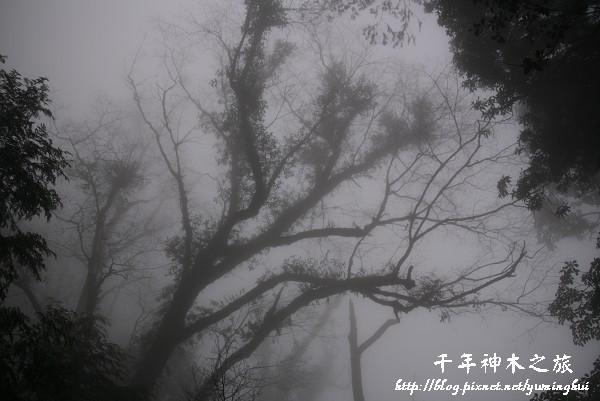 馬告生態公園--神木園 (50).jpg