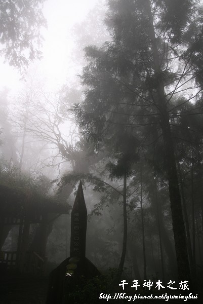 馬告生態公園--神木園 (49).jpg