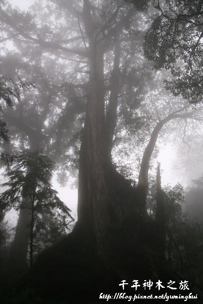 馬告生態公園--神木園 (48).jpg