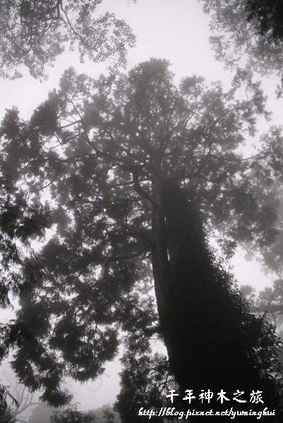馬告生態公園--神木園 (47).jpg