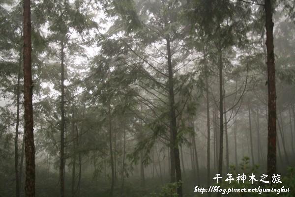 馬告生態公園--神木園 (46).jpg