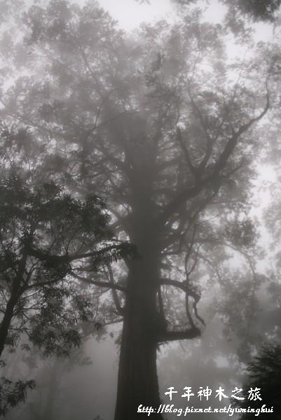 馬告生態公園--神木園 (42).jpg