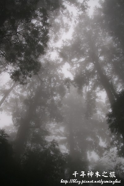馬告生態公園--神木園 (41).jpg