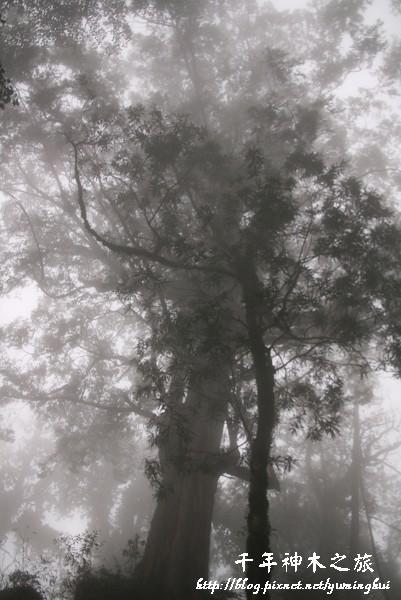 馬告生態公園--神木園 (40).jpg