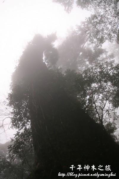 馬告生態公園--神木園 (36).jpg