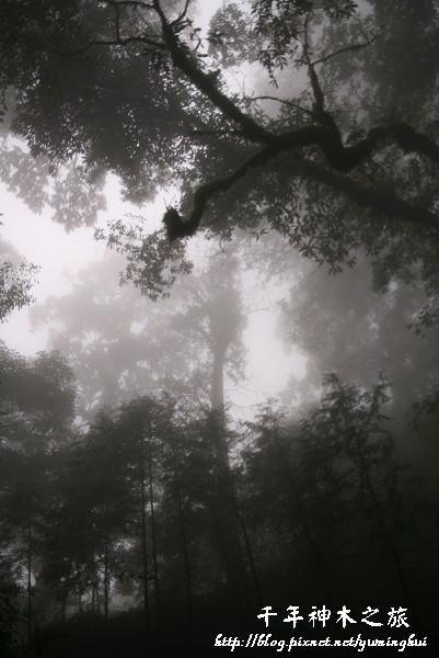馬告生態公園--神木園 (35).jpg
