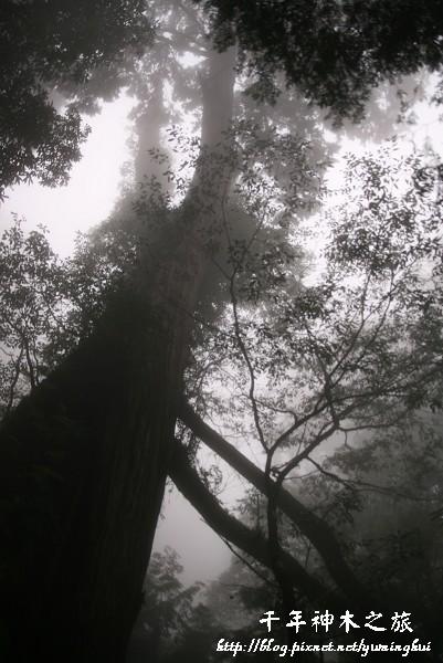 馬告生態公園--神木園 (34).jpg