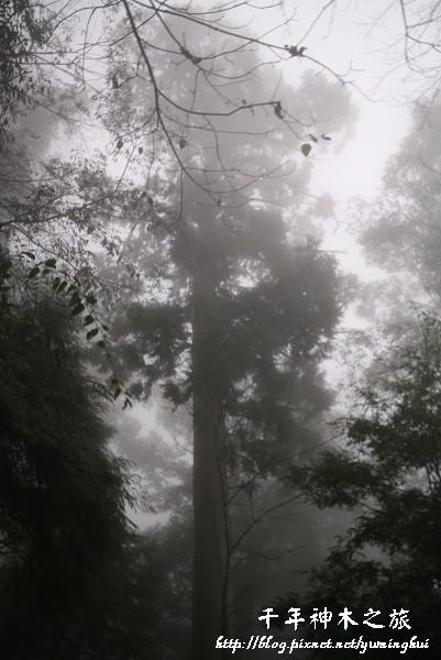 馬告生態公園--神木園 (31).jpg