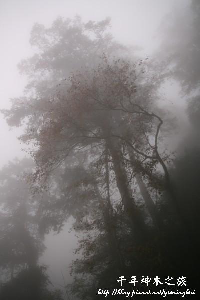 馬告生態公園--神木園 (29).jpg
