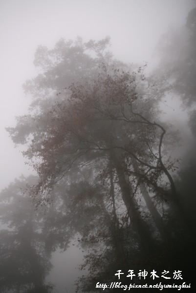 馬告生態公園--神木園 (28).jpg