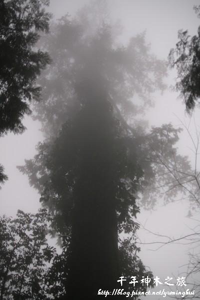 馬告生態公園--神木園 (27).jpg