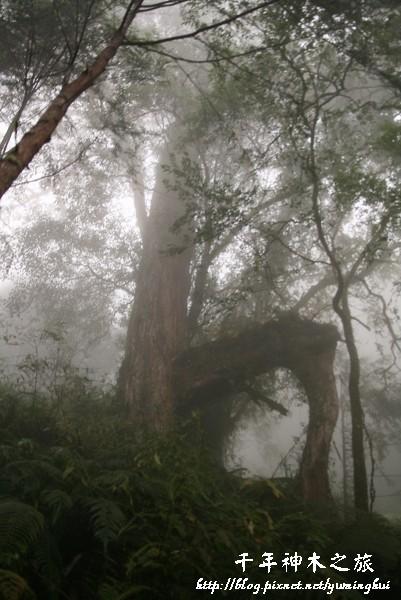 馬告生態公園--神木園 (26).jpg