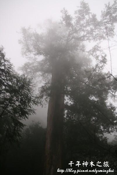 馬告生態公園--神木園 (25).jpg