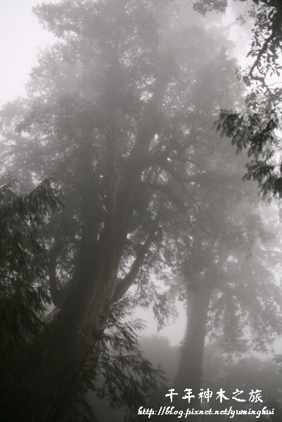 馬告生態公園--神木園 (22).jpg