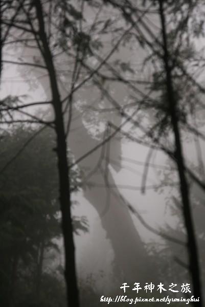 馬告生態公園--神木園 (20).jpg
