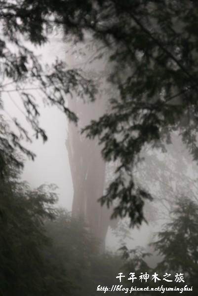 馬告生態公園--神木園 (17).jpg