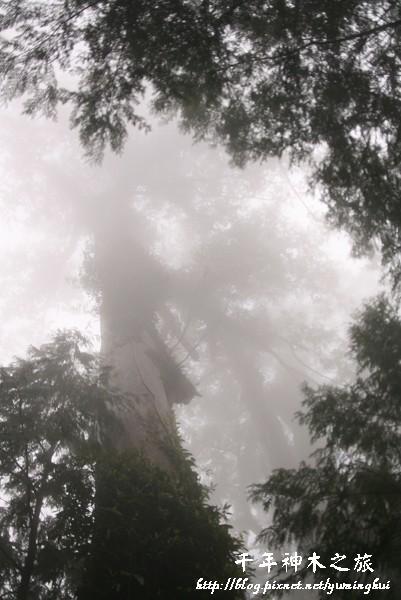馬告生態公園--神木園 (8).jpg