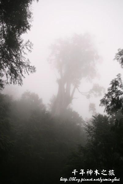馬告生態公園--神木園 (6).jpg