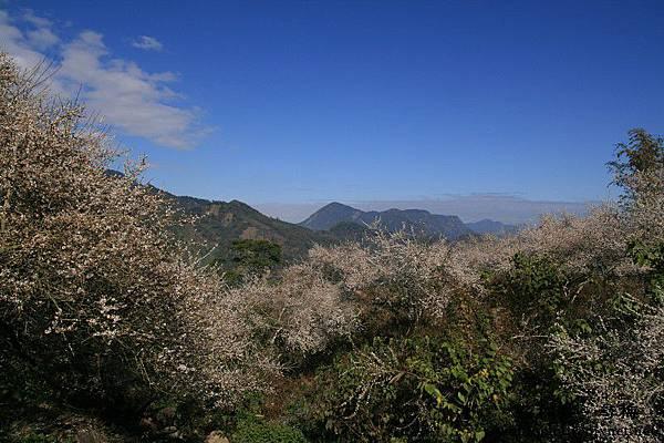 烏松崙‧尋梅 (57)