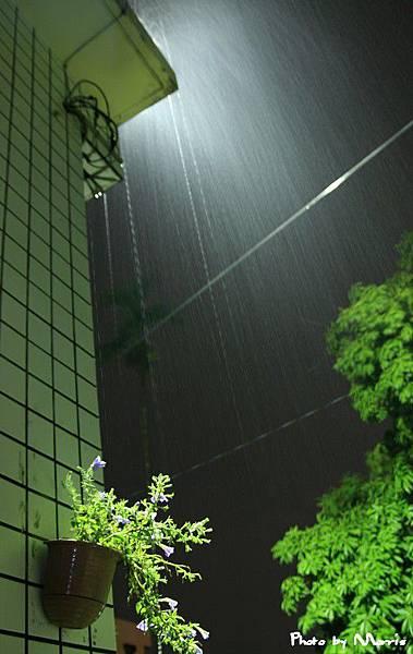 雨夜花 (3).jpg