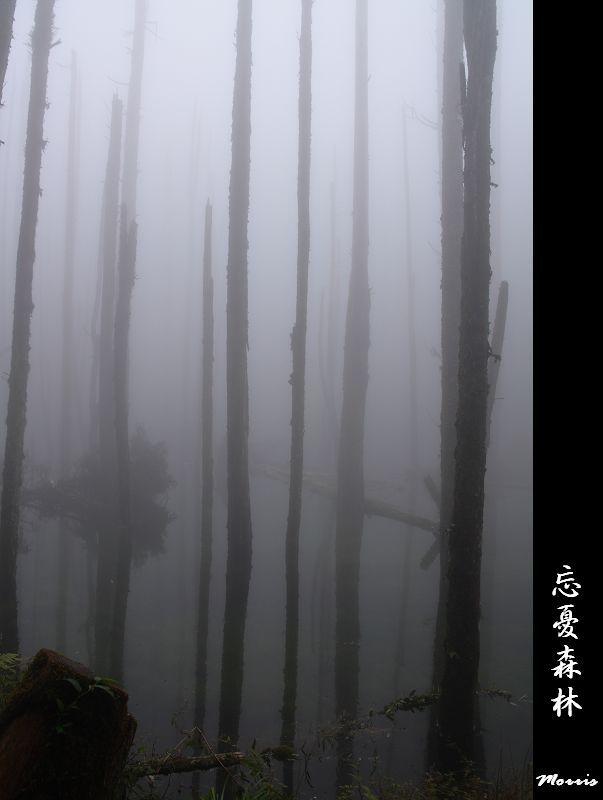 忘憂森林 (36).jpg