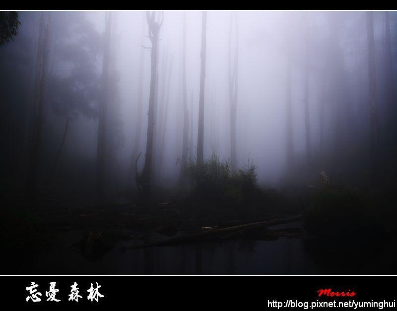 忘憂森林 (51).jpg