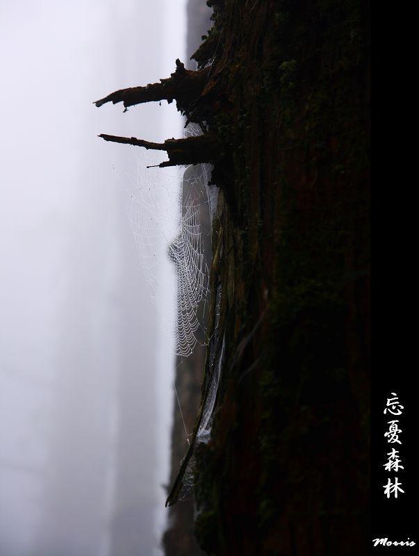 忘憂森林 (59).jpg