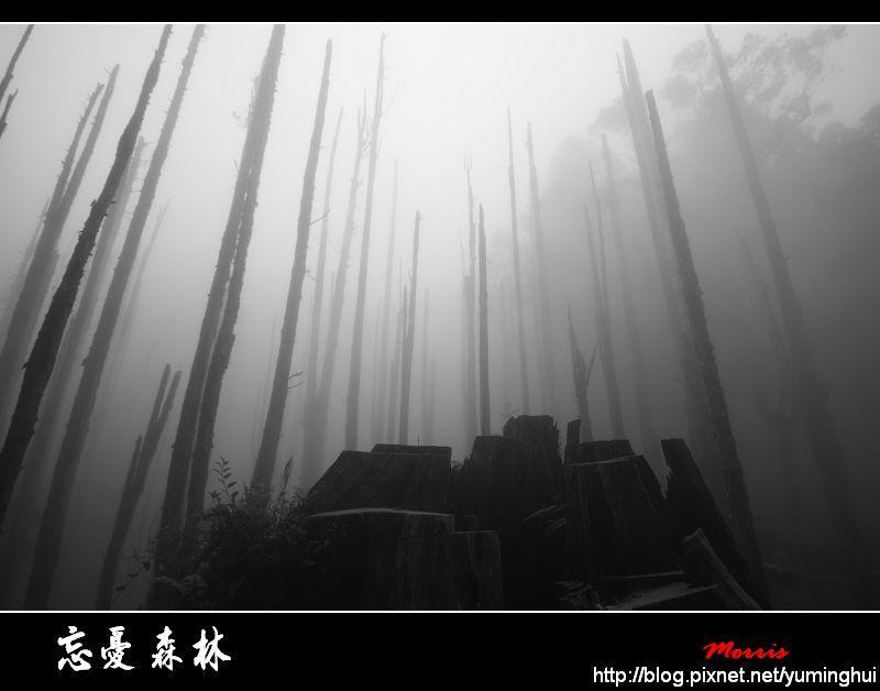 忘憂森林 (79).jpg