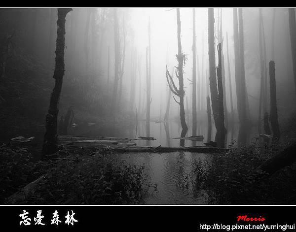 忘憂森林 (88).jpg