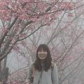 鹿谷台大茶園 (23)