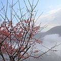 鹿谷台大茶園 (32)