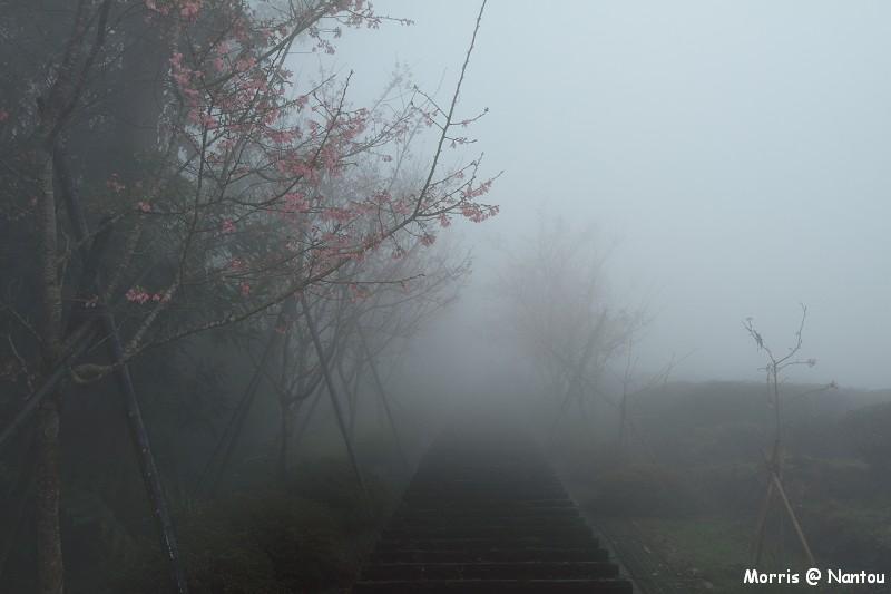 鹿谷台大茶園 (94)