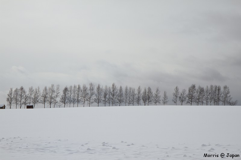美瑛之冬 三 (73)