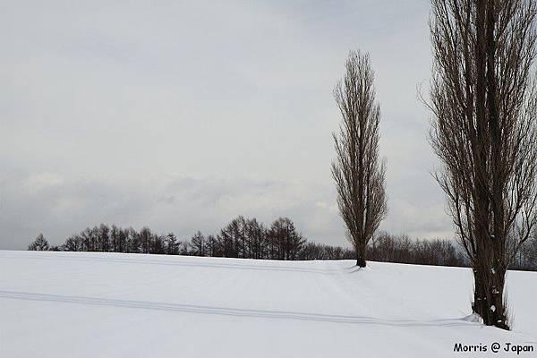 美瑛之冬 三 (41)