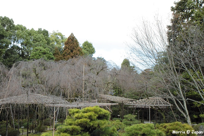 平安神宮 (11)