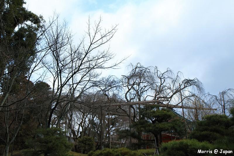 平安神宮 (17)