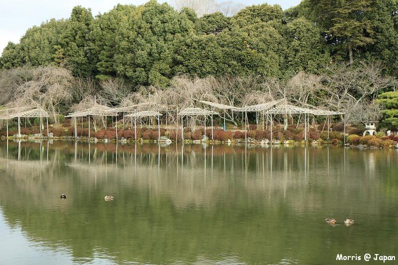 平安神宮 (37)