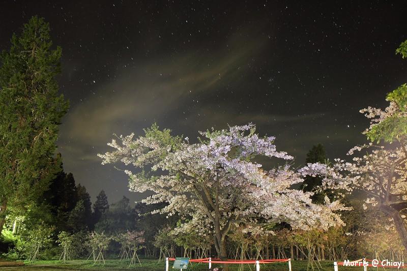 2012阿里山櫻花季 (1)