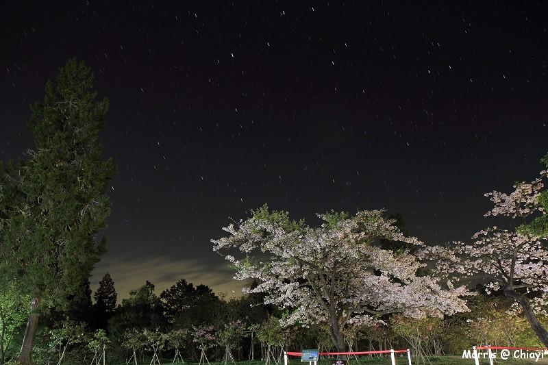 2012阿里山櫻花季 (6)