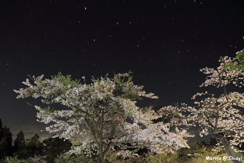 2012阿里山櫻花季 (7)