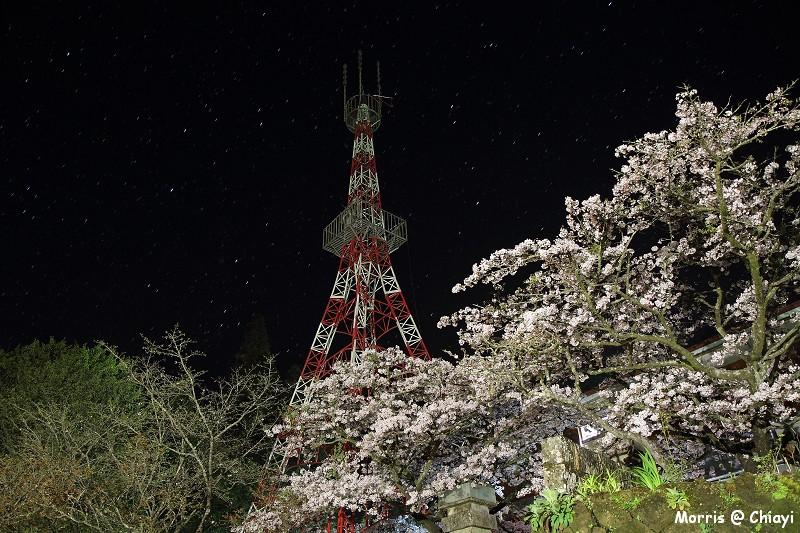 2012阿里山櫻花季 (8)