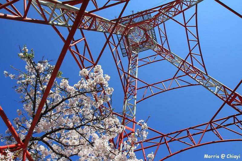 2012阿里山櫻花季 (73)