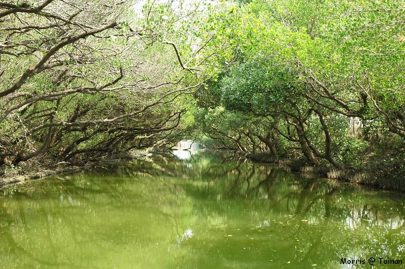 四草綠色隧道 (25)