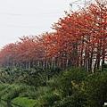 埤頭木棉花道 (11)