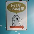 JR 旭山動物園號 (15)