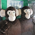 JR 旭山動物園號 (21)